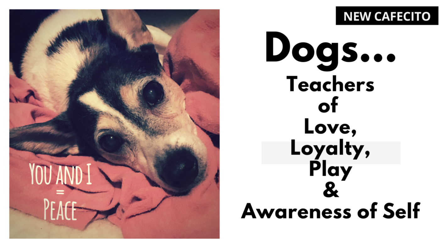 Dogs…Teachers of Love, Loyalty, Play & Awareness of Self